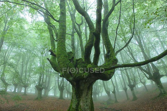 Espanha, Árvores no Parque Natural Urkiola — Fotografia de Stock