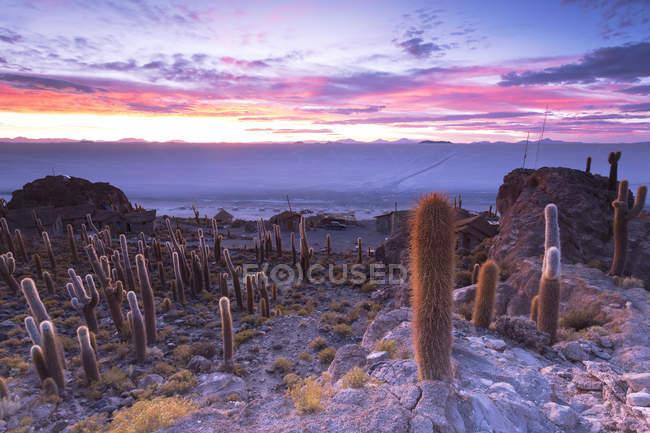 Bolivia, Salar de Uyuni, Isla Incahuasi con plantas sobre terreno - foto de stock