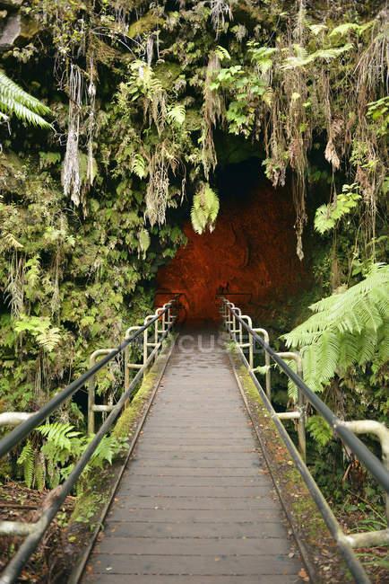 Entrada de ilha grande, Parque Nacional de vulcões, EUA, Havaí, do Nahuku, tubo de Lava Thurston — Fotografia de Stock