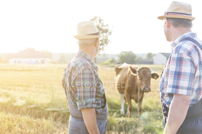 Due agricoltori guardando mucca — Foto stock