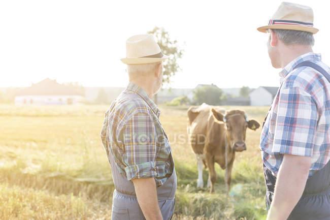 Два фермерів, дивлячись на корову — стокове фото