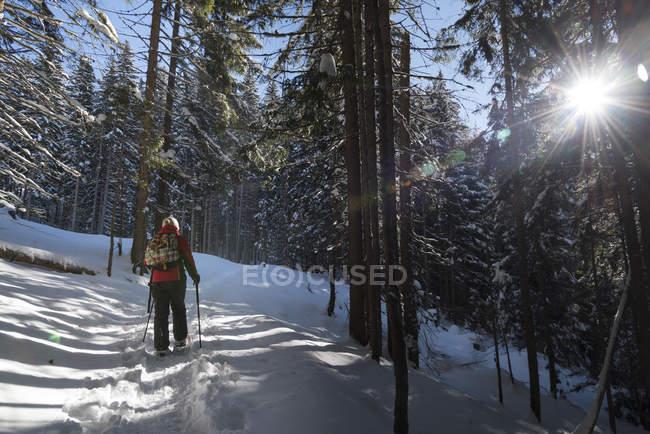 Австрия, Тироль, Швац, женщина, прогулки на снегоступах в лесу — стоковое фото