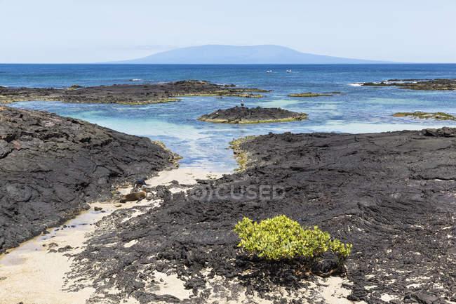 Ecuador, Galapagos Islands, Isabela, coast with Galapagos sea lions — Stock Photo