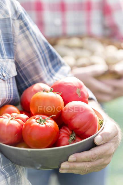 Ciotola della holding della coltivatore di pomodori biologici — Foto stock