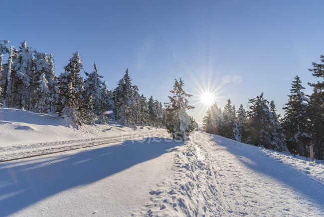 Alemanha, Saxônia-Anhalt, Parque Nacional de Harz, pista de caminhada no inverno, contra o sol — Fotografia de Stock