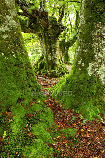 Spain, Trees at Urkiola Natural Park — Stock Photo