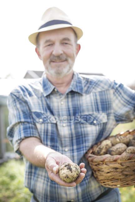 Farmer on organic farm holding basket with potatoes — Stock Photo