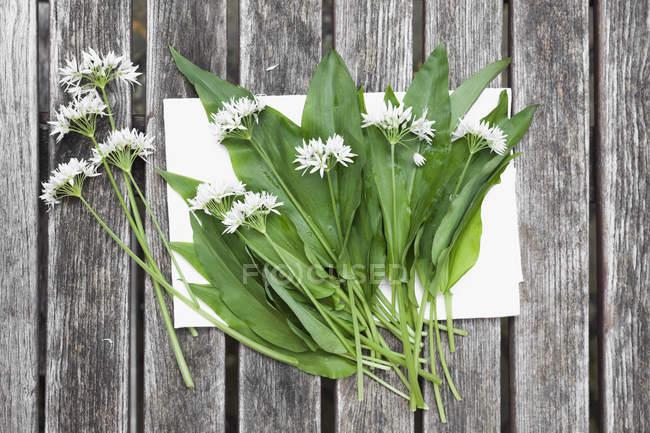 Цветы и листья дикого чеснока — стоковое фото