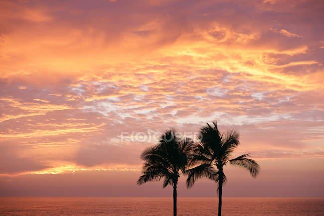 États-Unis, Hawaï, Big Island, Kohala Coast, silhouettes de deux palmiers au coucher du soleil — Photo de stock