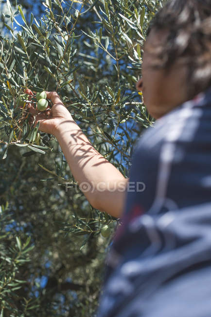 Greece, woman holding twig of olive tree — Stock Photo