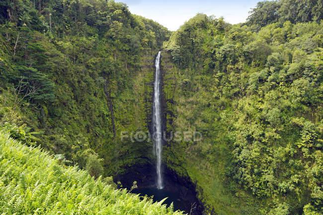 Estados Unidos, Hawai, isla grande, Honomu, Akaka Falls - foto de stock