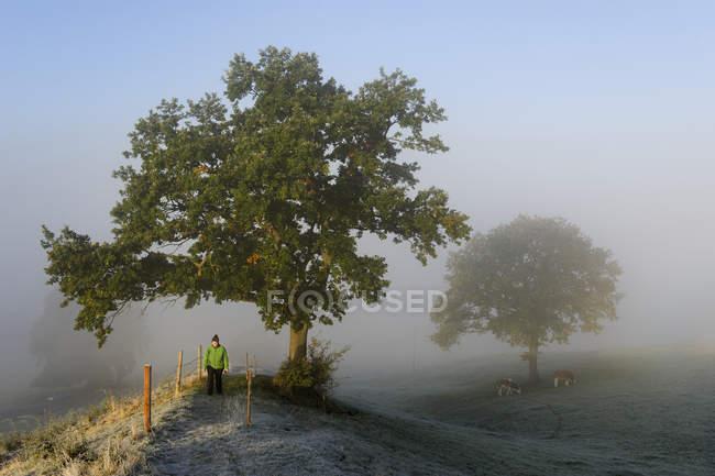 Homem de terra Blaues, Pfaffenwinkel, Alemanha, Alta Baviera, embaixo da árvore com nevoeiro Outono perto Aidling — Fotografia de Stock