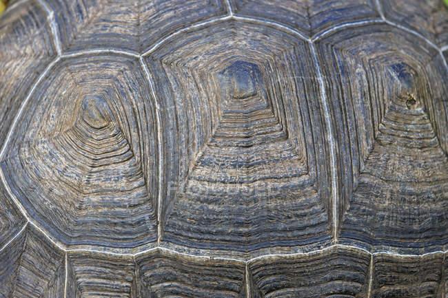 Vista di giorno closeup di guscio di testuggine Galapagos — Foto stock
