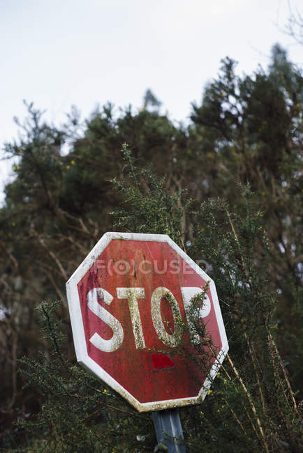Espanha, Galiza, Ferrol, sinal de paragem escondido pela vegetação — Fotografia de Stock