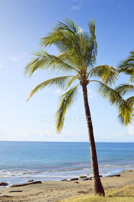 США, Гавайи, Мауи, Лахайны, пальмы на пляже — стоковое фото