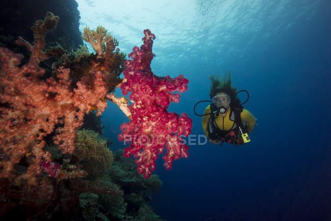 Océano Pacífico, Palaos, buceador en arrecife de coral con coral arbóreo - foto de stock