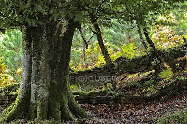 Spagna, alberi al parco naturale di Urkiola durante il giorno — Foto stock