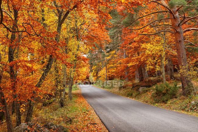 Vista de árboles con hojas naranjas contra la carretera durante el día - foto de stock