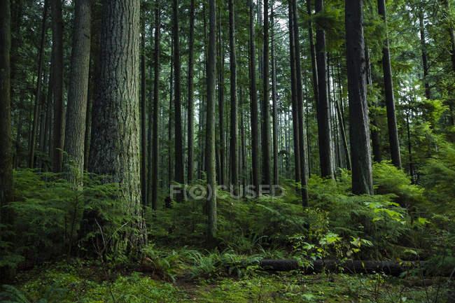 Canadá, Vancouver, floresta durante o dia — Fotografia de Stock