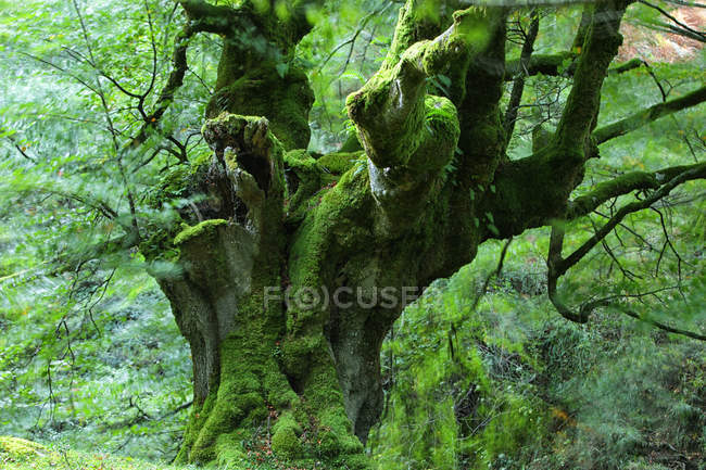View of tree at forest with moss — Stock Photo