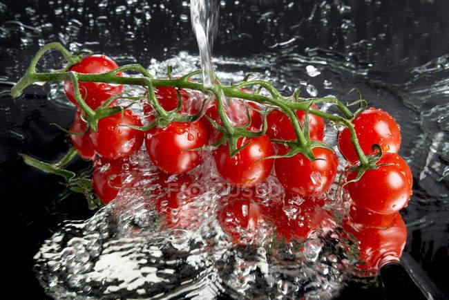 La vid de lavado de tomates cherry - foto de stock