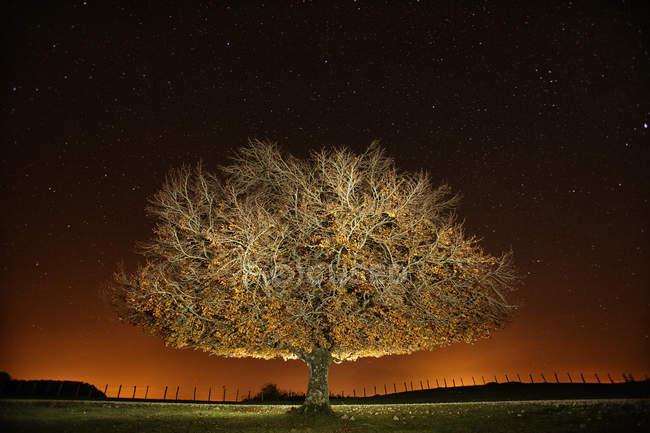 Представление единого дерева ночью — стоковое фото