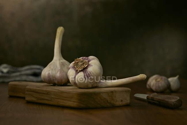 Bulbi di aglio freschi — Foto stock