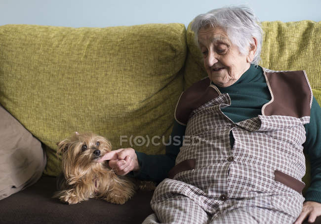 Old woman petting yorkshire terrier on couch — Stock Photo