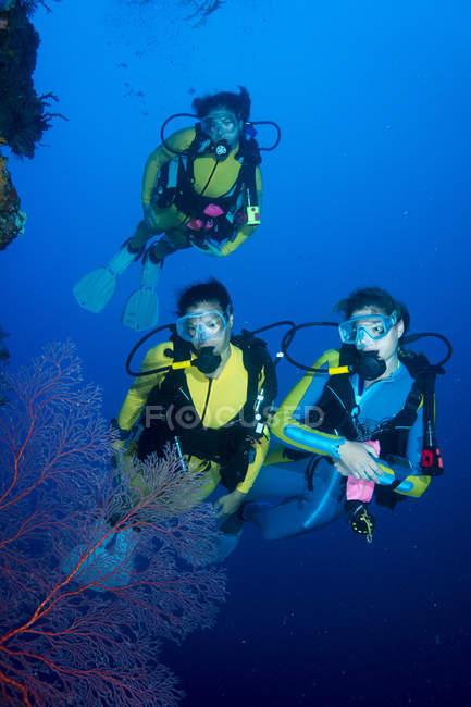 Тихого океана, Палау, аквалангистов в коралловый риф с гигантскими вентилятора коралловых — стоковое фото
