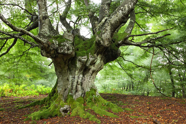 Spagna, alberi al parco naturale di Urkiola — Foto stock