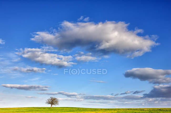 Fernsicht auf grüner Baum in der Mitte der Ernte Feld an der Provinz Zamora, Spanien — Stockfoto