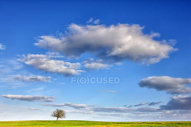 Vista a distanza dell'albero verde in mezzo al campo coltivato nella provincia di Zamora, Spagna — Foto stock