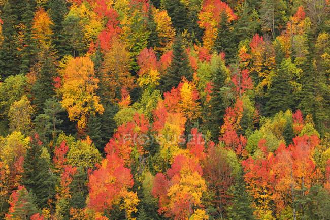 Аэрофотоснимок хвойный лес осенью при дневном свете, Национальный парк Ордеса, Испания. — стоковое фото