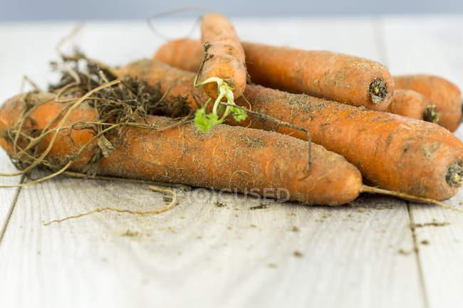 Recién elegido zanahorias orgánicas - foto de stock