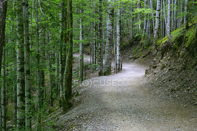 Spain, Ordesa National Park, forest path with trees on sides during daytime — Stock Photo