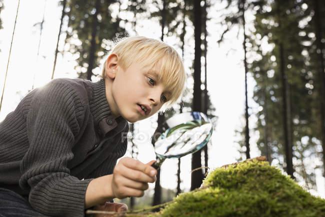 Маленький мальчик с лупой в лесу — стоковое фото