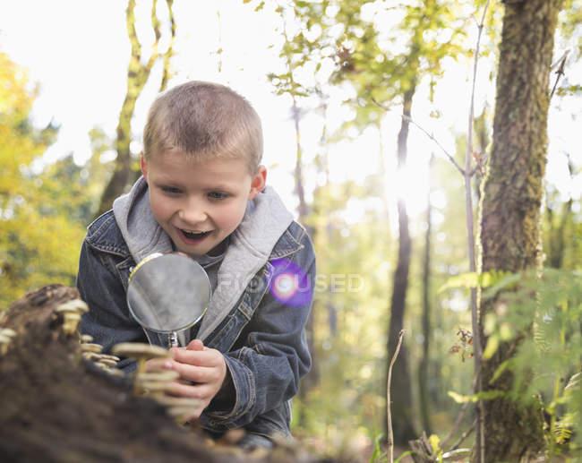 Niño viendo hongos con lupa en un bosque - foto de stock