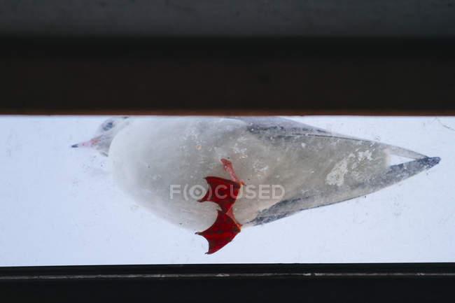 Vista di un uccello del Gabbiano — Foto stock