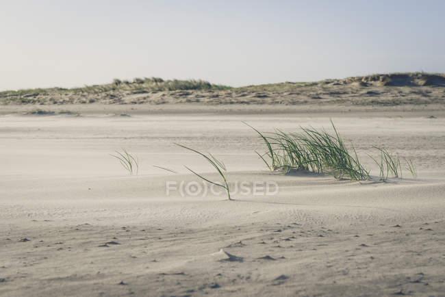 Alemanha, Schleswig-Holstein, St. Peter-Ording, vista para a Duna de areia — Fotografia de Stock