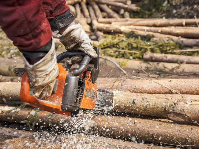 Logger's hands sawing tree trunk with motor saw — Stock Photo