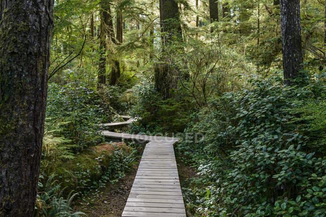 Canada, Colombie-Britannique, Vancouver Island, Tofino, Schooner Cove sentier de randonnée — Photo de stock