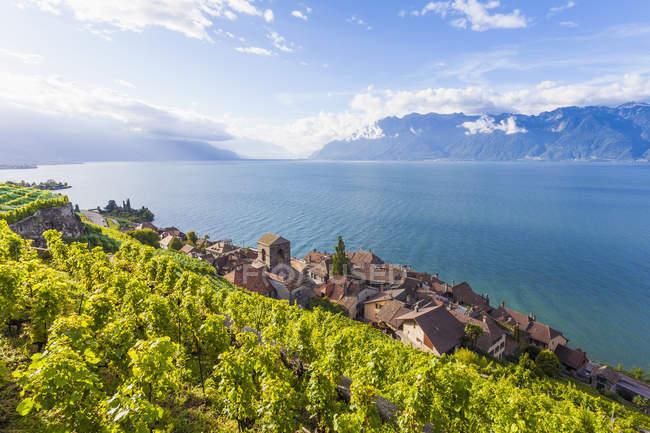 Switzerland, Lavaux, Lake Geneva, wine-growing area Saint-Saphorin — Stock Photo