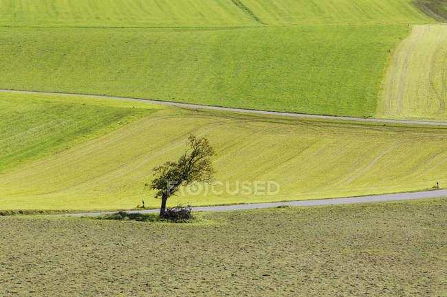 Allemagne, Bavière, Chiemgau, prés et des arbres — Photo de stock