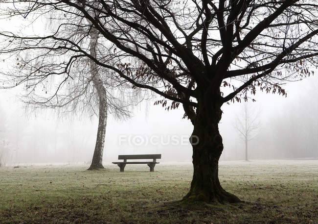 Austria, Mondsee, park bench and bare birch tree in morning mist — Stock Photo
