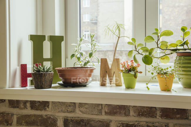 Window sill with plants and letters H and M indoors — Stock Photo