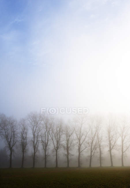 Austria, Mondsee, row of bare trees in morning mist — Stock Photo