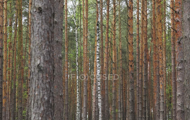 Forest with trees during daytime — Stock Photo