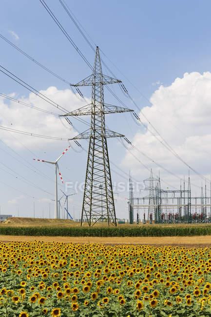 Посмотреть подсолнухов поле и ветер ферма Moenchhof-Хальбтурн в Бургенланд, Австрия — стоковое фото