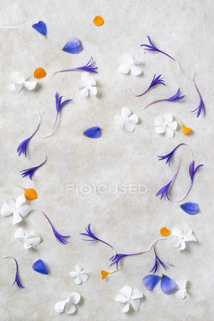 Frame of flowers, pedals of Hydrangea, Centaury and Phlox — Stock Photo