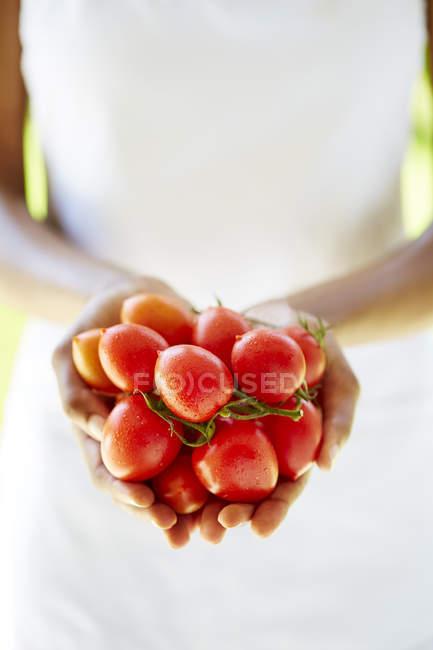 Mujer manos explotación tomates - foto de stock